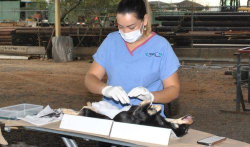 Avanza Centro de Atención Canina y Felina (CACF) con el sistema TNR
