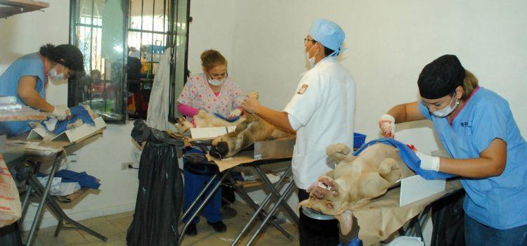 Anuncian jornadas de salud animal del CACF