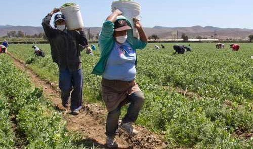 Sin paga, 71% de mujeres que trabajan en el campo