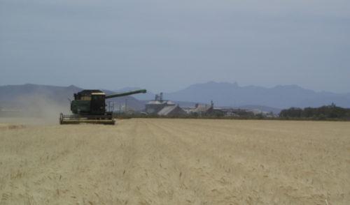 Sonora a la vanguardia en la producción agroalimentaria en el país