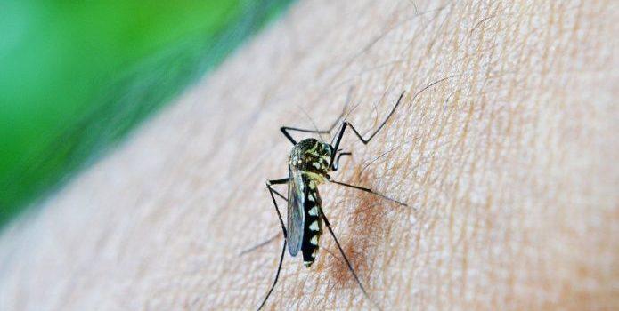Se registran 20 casos de zika en una semana en Sonora