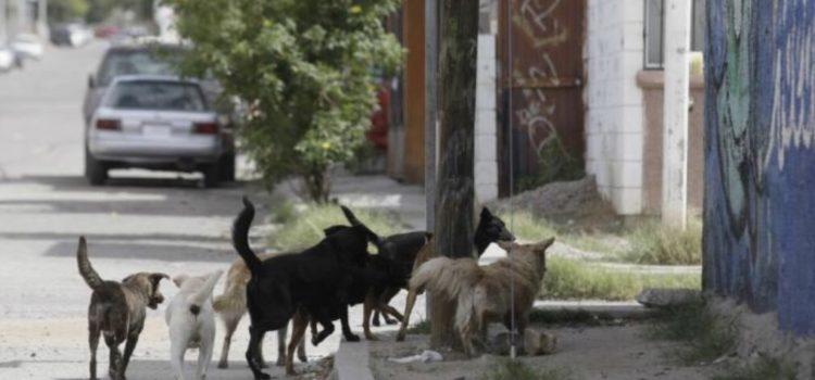 Sancionarán a dueños irresponsables de perros