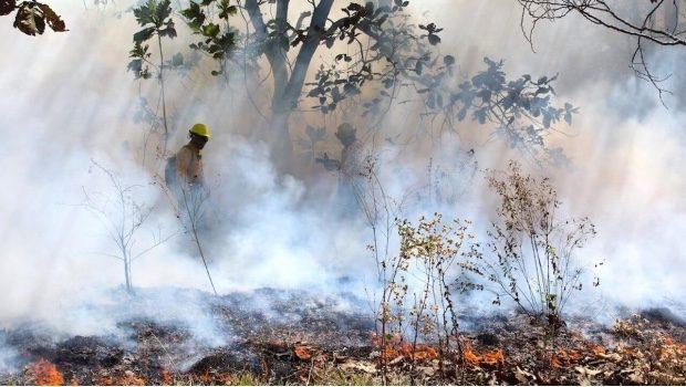 Se registran 116 incendios forestales en todo el país
