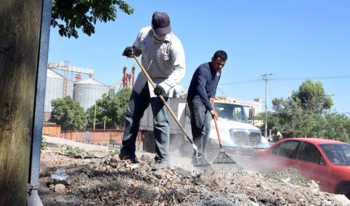 Inicia Ayuntamiento de Cajeme operativo para controlar y erradicar la plaga de Alacrán