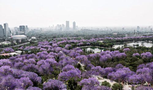 Conoce detalles sobre el Plan Maestro para Chapultepec