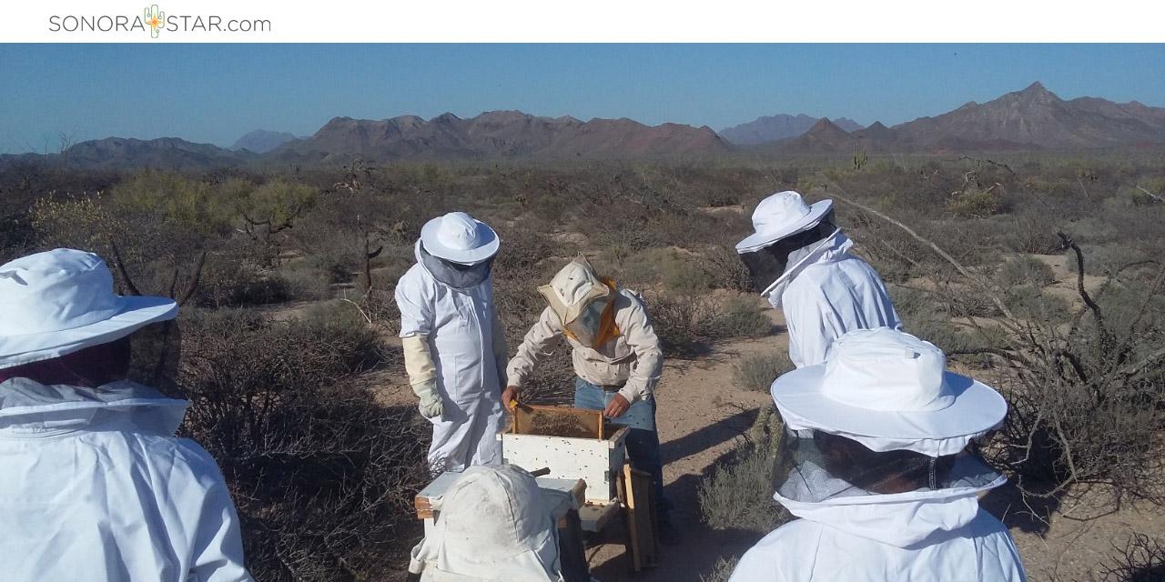 Proyecto apícola Comcaac Sonora Star